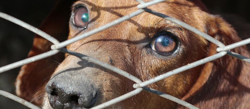 Saving Animals in Garza County